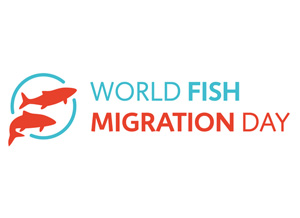 World Fish Migration Day